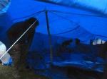 tarps in Okreni